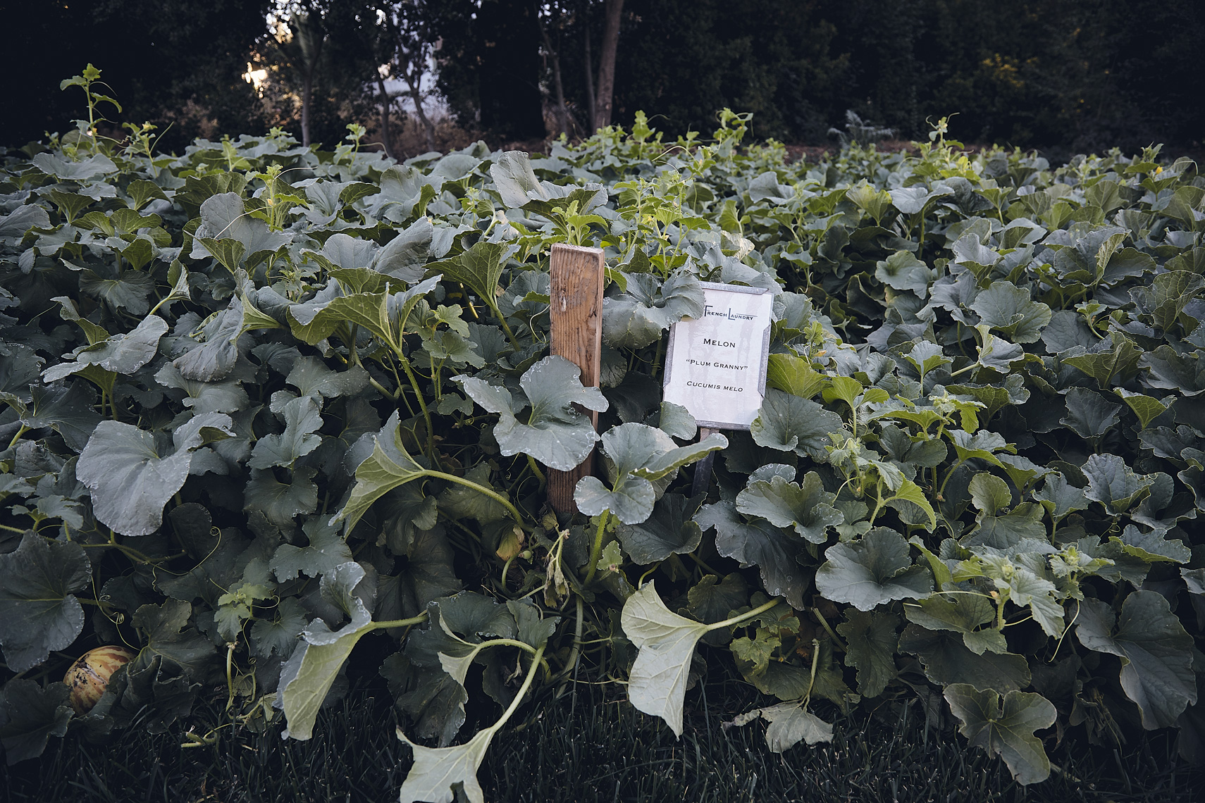 French_Laundry_003
