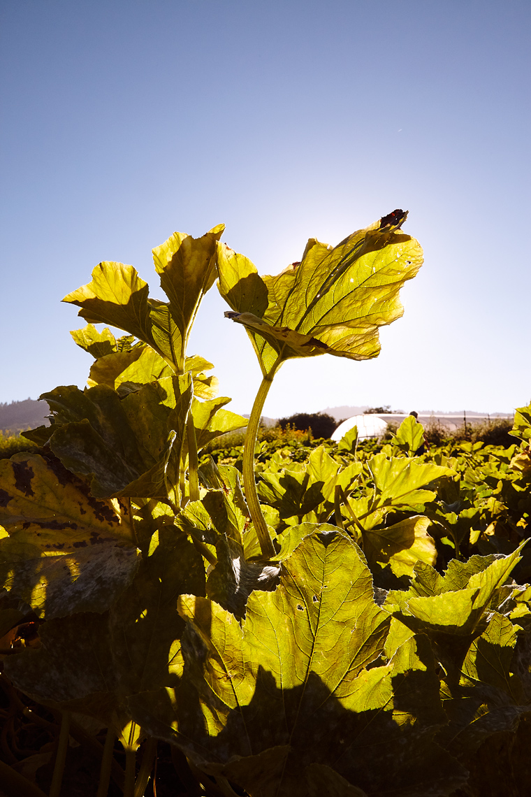 French_Laundry_029